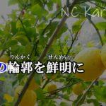 ○  Lemon 米津 玄師 ニコカラ offvocal カラオケ   karaoke 神曲